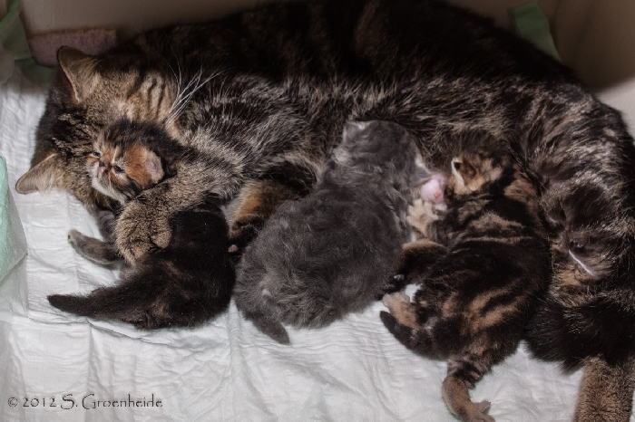 "2013: Kittens from Golosinas Fame Factor aka ""Brandy"" x Chanel van Syltin's Huis"